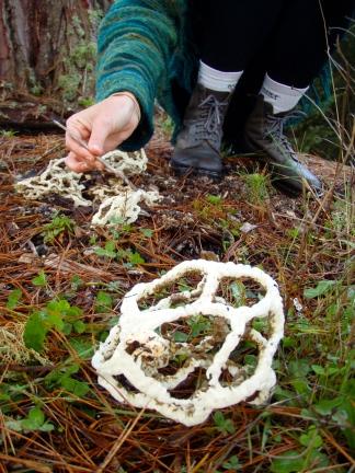 Crazy fungus ball